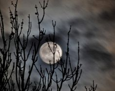 Moon Photo cloudy night sky moon photograph trees by LoneCrowPhoto, $30.00