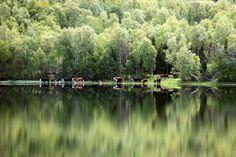 Langt, langt borte. Den fjerne lyden av kubjeller og raut. River, Outdoor, Outdoors, Outdoor Games, The Great Outdoors, Rivers