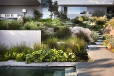 Plant combination is great. Bridle Road Residence Cape Town