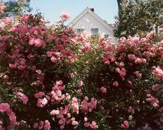 "Joel Meyerowitz (@joel_meyerowitz) sur Instagram: ""Provincetown, Massachusetts, 1983."""