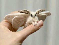 Needle felted moth