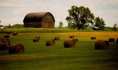 You know you're in good country when the hay comes in barrels not bales. :)