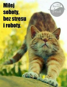 Saturday Quotes, Weekend Humor, Good Morning Funny, Cat Memes, Cute Cats, Funny Cats, Beautiful Birds, Cats And Kittens, Cute Animals