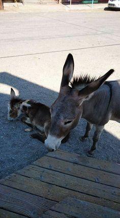 Holbrook Arizona, Animals, Animales, Animaux, Animal, Animais