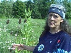 VIDEO: Teasel root ('Dipsacus') - Herb to cure Lyme disease.