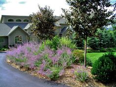 Entry driveway landscape with beautiful Russian Sage.