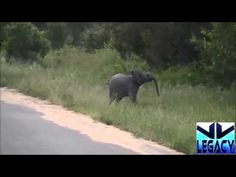 Baby Elephant Calf Try to Catches Birds : Makes Situation Funny ᴴᴰ -  #birds #animals #bird_watchers_daily #animal #birdwatching #pets #nature_seekers #birdlovers Dog Training – The Perfect Pooch System!  Click HERE! Animal Fight, Animal Attack, Funny Animal – Various Animal Videos. Free SUBSCRIBE For Watching More Videos & Update For Upcoming... - #Birds