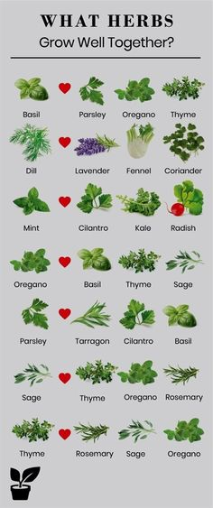 what herbs grow well together-companion planting Planting herbs together is a st. - - what herbs grow well together-companion planting Planting herbs together is a step toward a flowering garden. Growing herbs together can promote the h. Gardening For Beginners, Gardening Tips, Urban Gardening, Organic Gardening, Gardening Services, Allotment Gardening, Gardening Zones, Herb Companion Planting, Plantation