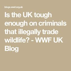 Is the UK tough enough on criminals that illegally trade wildlife? - WWF UK Blog
