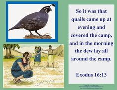 Bible Fun For Kids Moses Manna Quail To