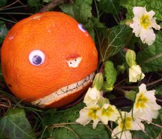 The birds have been eating Mr Angry Orange's primroses