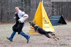 Working Dog Forum -- Discussion of Working Dogs, Training & Breeding--not gonna call it IPO, it'll always be Schutzhund to me