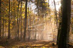 Nebel im Herbstwald - auf http://ronni-shop.fineartprint.de