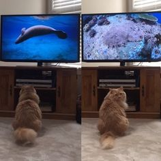 Nature documentaries are his guilty pleasure, he always makes sure I'm paying attention.