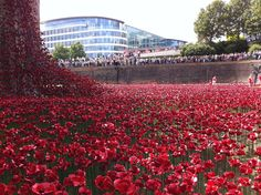 """Hannah Kokoschka planting poppies at the Tower of London August 2014 as part of Paul Cummins amazing installation """"Blood Swept Land and Seas of Red."""""""