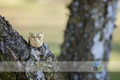 Brass Owl ring in tree, jewelry making, metal smith, Nature by Design Photography