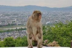 Kyoto et le Arashiyama monkey park, bientôt sur www.pixels-du-bout-du-monde.blogspot.fr