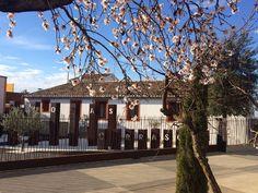 Bodega Chozas Carrascal.   https://fustaiferro.wordpress.com/ #bodega #terraza #vino #valencia #fustaiferro #chozascarrascal