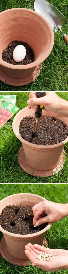 101 Gardening: Planting a vegetable garden in pots