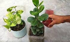 Amióta így öntözöm a virágaim, minden szomszédom irigykedve lép be a házamba! Hydroponic Growing, Growing Plants, Hydroponics, Garden Gates, Planting Seeds, Ikebana, Diet And Nutrition, Home Remedies, Indoor Plants