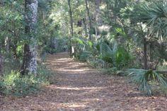 A trilha, em Juniper Springs