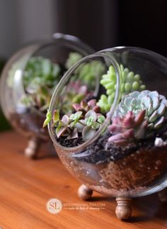 How to make A Glass Terrarium