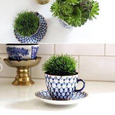 Inspiração de hoje  a xícara vira suporte para as suculentas ! Sabe quando quebra quase todas as xícaras do nosso jogo? E sobra só uma que tal transformar em vaso? Ficam lindos  decorativos e ainda dão um toque bem charmoso #suculenta #xicara #coffe#tea#sustentavel#sustentable #sustentabilidade #transformar #inovar #inovation #plants #horta #hortaemcasa#little #beautiful by central.de.ideias http://ift.tt/1TrLRa8