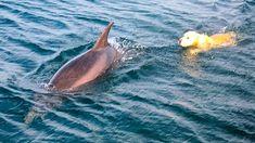 Du denkst, Hunde und Delfine passen nicht zusammen? Wir beweisen dir im Video, dass das Gegenteil der Fall sein kann.