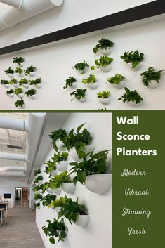 These wall sconce planters are perfect for your home or commercial office. #wallsconceplanters #planterwalldesign #hangingplants Stone Planters, Hanging Planters, Commercial Planters, Empty Wall, Plant Wall, Wall Design, Wall Sconces, Indoor Plants, Courtyards