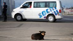 Sochi Officials Order Killing of Stray Dogs for Olympics