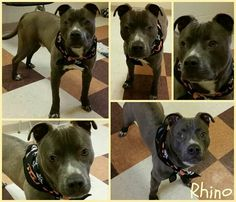 #adoptable at #Joliet township animal control on Facebook in #Chicago