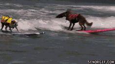Animated Gifs | BaggyBulldogs