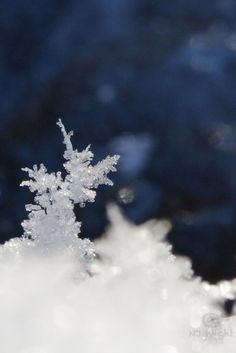 Miniature sculpture of snowflakes.