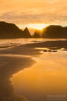 Golden Evening by Patricia Davidson on 500px )