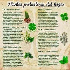 Plantas que protegen tu hogar Más Organic Gardening, Gardening Tips, Plantas Indoor, Herbal Magic, Feng Shui Tips, Plant Decor, Beautiful Gardens, Indoor Plants, House Plants