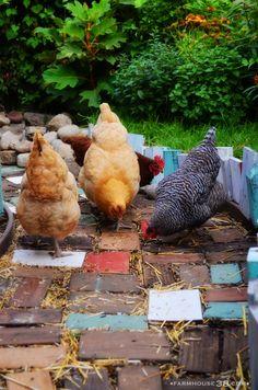 Chicken Busywork in the Farmhouse38 Chicken Garden