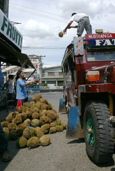 transporting durian fruit to the market, Davao City, The Phillippines
