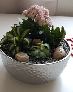 Succulents, Plants, Succulent Plants, Plant, Planets