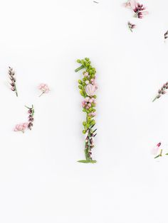 Blossom type by Zero, via Behance
