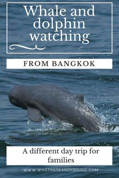 Whale and dolphin watching day trip from Bangkok Thailand to see Bryde's whales and Irrawaddy dolphins.