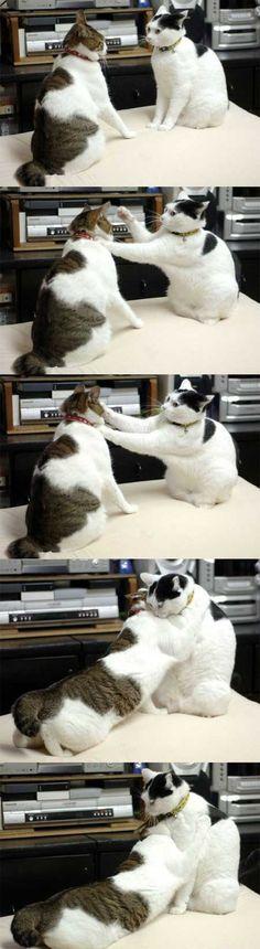 quarrel (੭ु ˃̶͈̀ ω ˂̶͈́)੭ु⁾⁾ヾ(=゚・゚=)ノ #neko #cat