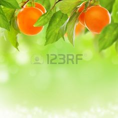 Yellow plum with a blurred background