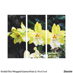 Orchid Trio Wrapped Canvas Print
