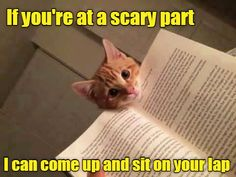 Even if you're not at a scary part, actually http://cheezburger.com/9032468224/sweet-cat-meme-cat-snuggle-if-u-scared Well isn't that just the sweetest cat meme ever!