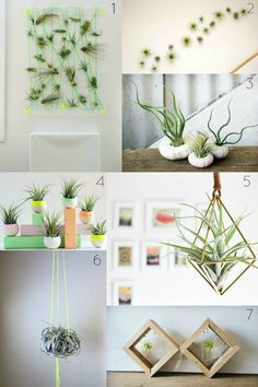 xerographic plant display ideas via Little Green Notebook