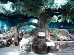 Ecology Island in Discover World at the McKinley Presidential Library & Museum