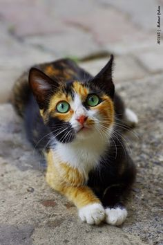 (@Emma Mo)Lilly- A sweet she-cat who had a big heart. Her sister is Viper and she lives in a small group of what's left of her family. She really wants a mate and is looking for one.   Age in cat years: 17