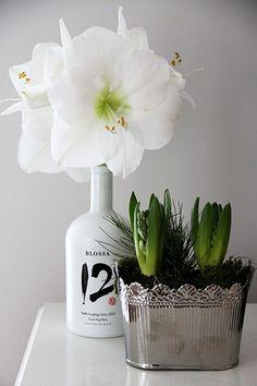 Koti 3:lle, Christmas Flowers