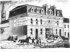 The Ontario Veterinary College opened in 1862 on Temperance Street in Toronto. OVC made the move to Guelph in 1921 as veterinary medicine became more interested in livestock health. Veterinary Colleges, Future School, School Admissions, Veterinary Medicine, College Hacks, Humane Society, Livestock, Vintage Images, Ontario