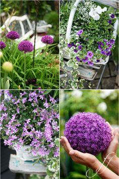 alium-sedia-shabby #gardencorner #garden